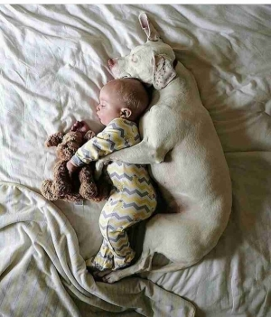 Can You Trust Your Dog With Your Baby Like This? (Photo)